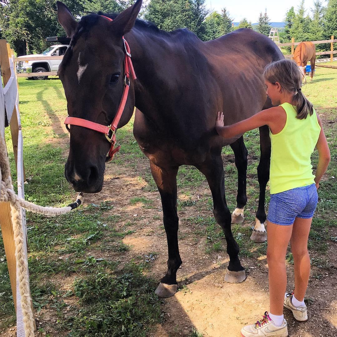 Equestrian Grooming