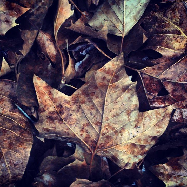 Autumn 🍂 Splendor