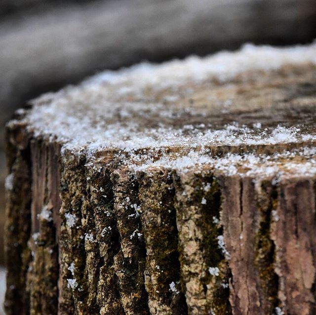 Lil' Bit of Snow #PaWX