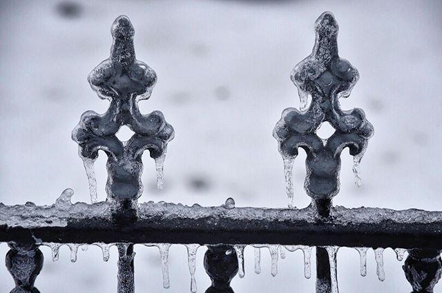 Ice encrusted iron fence