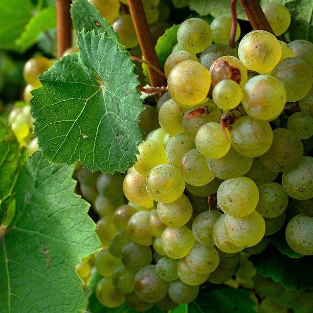Finger Lakes Wine & Cider